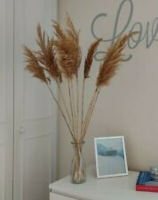 10 x Natural Pampas Grass Bunch