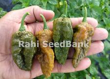 Bhut Jolokia Khaki - Rare in Bhut Jolokia, Ghost Chilli Family! - OZ Grown Seeds
