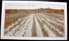 BRIAR CREST PA 1920 MEN TENDING FLOWERING BLUBS IN ROWS