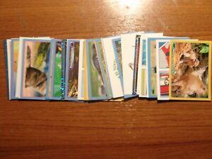 Lote de 33 cromos de la coleccion Animales y 20 cartas ? de animales de Panini