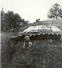 Original Vintage 1940s Rp- Dog- Puppy- Cocker Spaniel- Old Fashion Cars- Park