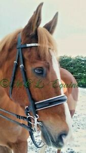 Lana Patent leather bridle with bling browband, white padding, in black&Brown.