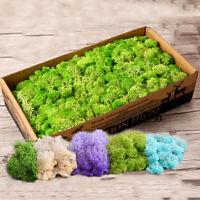 1 Bag DIY Craft Flower Fake Plant Moss Artificial Landscape Micro Reindeer