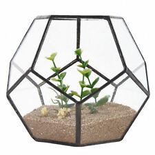 Black Glass Pentagon Geometric Terrarium Container Window Sill Decor Flower C5T8