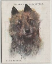 Cairn Terrier Dog Canine Pet 1920s Ad Trade Card