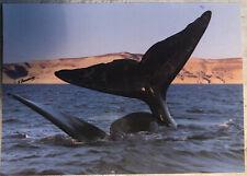 Shark Turtle Humor New Postcard FUNNY SEA ANIMAL WHALE Dolphin
