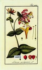 6 Botanical Herbal Prints from