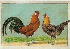 Postcard! Hamburger Goldsprenkel