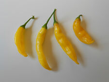 Ananas-Chili -Aji Pineapple- 10 Samen *Leckere Chili mit Ananasaroma* Top-Ertrag