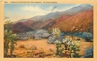 Linen Postcard CA N226 Cholla Cactus on the Desert Wildflowers Mojave 1950 Post