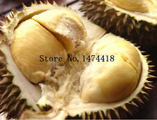 10pcs Durian Seeds Delicious Tree King Of Fruit Rare Plants Bonsai, fresh seeds