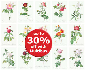 Botanical Roses flower Posters Prints VINTAGE A4 A5 A6 Home Flower Decor Redoute
