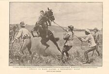 1900 ANTIQUE PRINT -  BOER WAR-UNUSED TO WAR'S ALARMS, A REFRACTORY HORSE