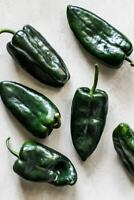 Pablano pepper Ancho chile 25 seeds