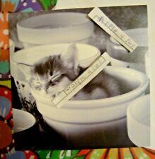 KITTEN CAT SLEEPING IN BOWL BLANK CARLTON NOTE CARD W/ ENVELOPE