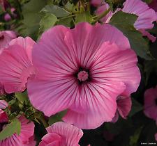1000 Samen Sommer Blumenmischung Wild Blumen-Wiese Bienenweide Hummelwiese