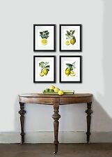 Kitchen Wall Decor Antique Botanical Print SET OF 4 Unframed LEMONS Art Prints