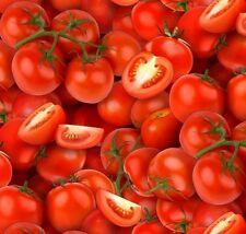 Fat Quarter Food Festival Tomaten Baumwolle Quilting Stoff 50 x 55cm und größer