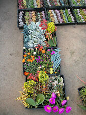 EXPRESS - SUCCULENTS - 50 succulent cuttings - all different! Ideal for projects