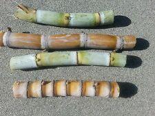 4 sticks sugar cane for planting , buy 2 orders get 2 sticks free