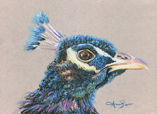 10x8 print Peacock 2 bird oil pastel painting animal art Andy Currie-Scarr