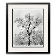 Oak Tree, Snowstorm, Yosemite National Park, 1948 Framed Art Print by Ansel Adam