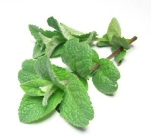 Essential Oil Peppermint 100% Pure Therapeutic Aromatherapy 10ml - 1 Litre UK