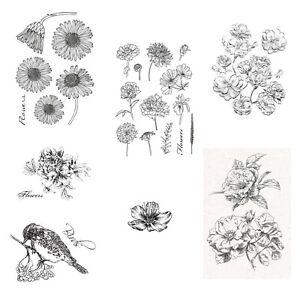 Studio Light Clear Stamps, Stempel, Blumen, Natur, - Auswahl -