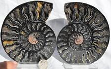 "9281 RARE 1in100 BLACK Ammonite PAIR Deep Crystals 110myo FOSSIL LRG 119mm 4.7"""