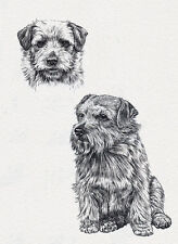 NORFOLK TERRIER CHARMING DOG SKETCH STUDY GREETINGS NOTE CARD