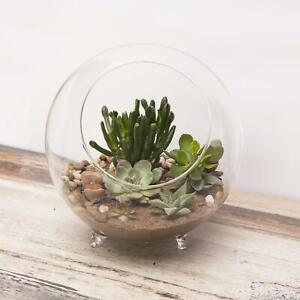 Panacea Large Glass Terrarium with Feet 25.4cm Dia