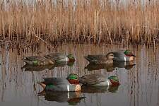 Avian-X Top Flight Green Wing Teal 8081