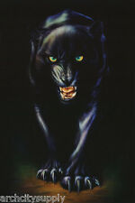 LOT OF 2 POSTERS :ANIMAL:  MEAN BLACK PANTHER - FREE SHIPPING ! #24-009   LP53 N