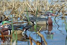 Avery Greenhead Gear GHG Pro Grade Wood Duck Decoys Life Size Floater Woodies