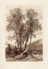 """Inviting 1800s James Duffield HARDING Engraving """"Study of Ash Trees"""" Framed COA"""
