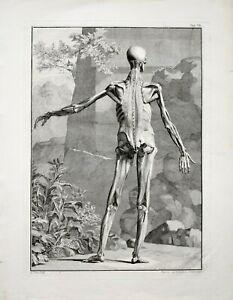 Scotin: Anatomische Studie einer stehenden männlichen Figur. 1747.