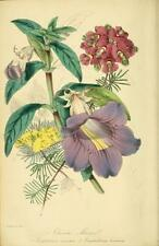 PAXTON'S MAGAZINE of BOTANY  100's Botanical Prints in PDF format on DATA DISC.