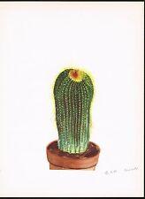 1930's Antique Echinocactus Parodia Leninghausii Cactus Botanical Art Print