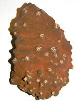 "#Lr-04 Rustic Rare Red Barite ""Oklahoma"" Rose Rock w/Cherokee Rose Legend Card"