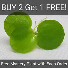 Aquarium Floating Amazon Frogbit + Free Mystery Plant Buy 2 Get 1 Free