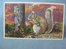 DuPont Powders Squirrel Postcard