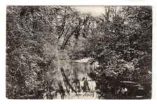 Silent Pool - Albury Photo Postcard 1904 / Guildford