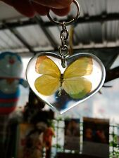 Real Insect Keychain in the clear acrylic,Butterfly