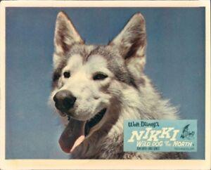 NIKKI WILD DOG OF THE NORTH DISNEY ORIGINAL LOBBY CARD