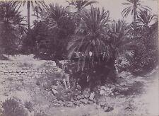 Maghreb Algérie Vintage citrate ca 1900