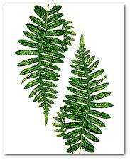 Fern Leaf Print, Botanical Alpine Polypody Art, 8 x 10 Inches, Unframed