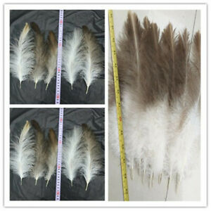 10-50pcs Rare eagle feather feather 6-14 inches /15-35 cm variety of specificati