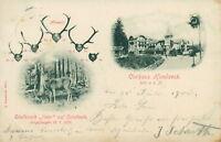 Ansichtskarte Kurhaus Hundseck Edelhirsch 1900 (Nr.779) Geweih