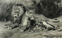 1883 Rosa Bonheur The Lion at Home | engraving superb tones | lioness with cubs