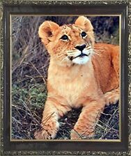 Lion Cub Big Cat Wild Animal Wall Decor Mahogany Framed Art Print Picture (20.